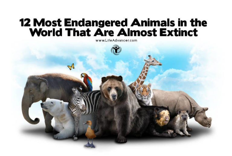 12 Most Endangered Animals in the World That Are Almost Extinct