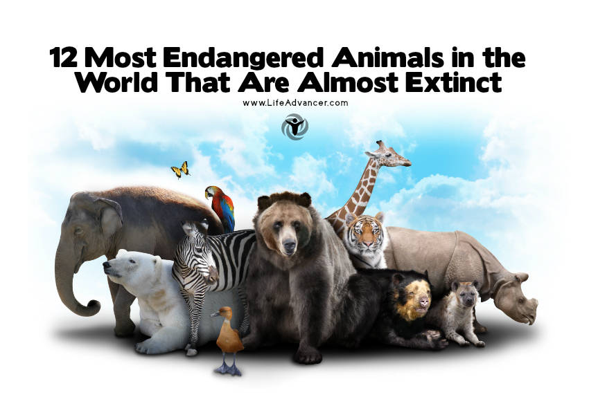 Most Endangered Animals 2017