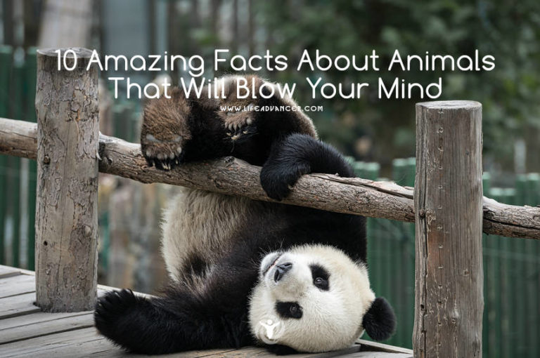 10 Amazing Facts about Animals (#5 Is Really Weird!)