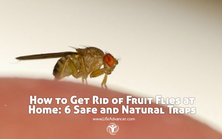 How to Get Rid of Fruit Flies at Home: 6 Safe and Natural Traps