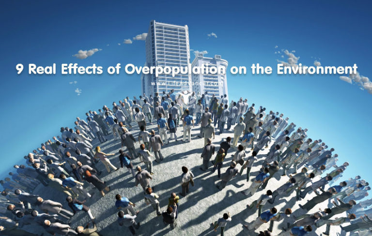 9 Real Effects of Overpopulation on the Environment