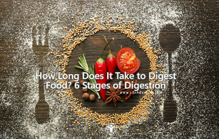 How Long Does It Take to Digest Food? 6 Stages of Digestion
