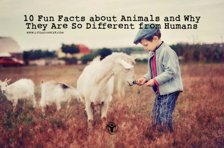 10 Fun Facts about Animals and Why They Are So Different from Humans