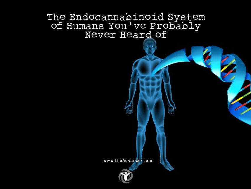 The Endocannabinoid System of Humans
