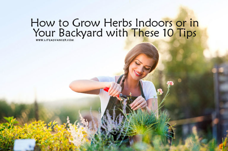How to Grow Herbs Indoors or in Your Backyard with 10 Tips
