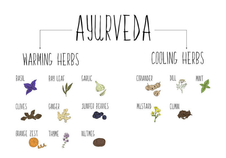 10 Ayurvedic Herbs & How to Use Them for Various Health Issues
