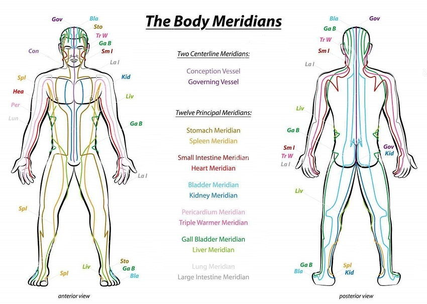 meridian system male body acupuncture meridians
