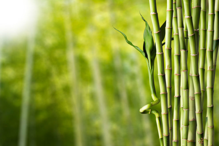 8 Benefits of Bamboo That Make It Great for Going Green