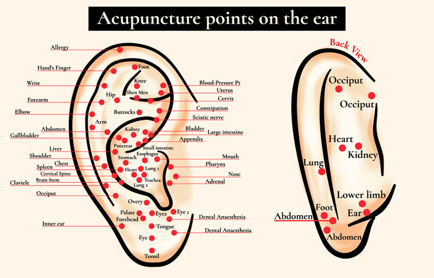 6 Powerful Ear Acupressure Points for Various Ailments & Aches