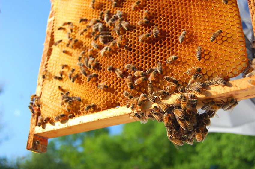 Practical Ways to Save Bees