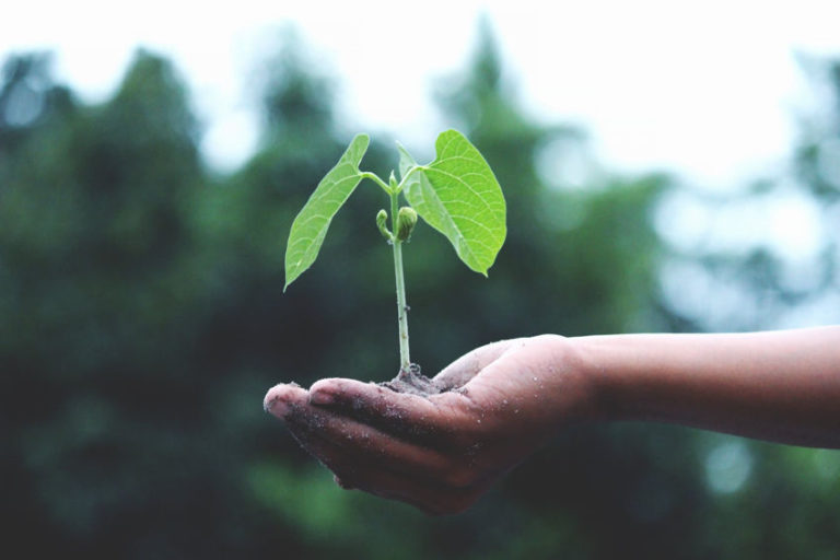 Read more about the article How to Plant a Tree in 7 Simple Steps & Why You Should Do It