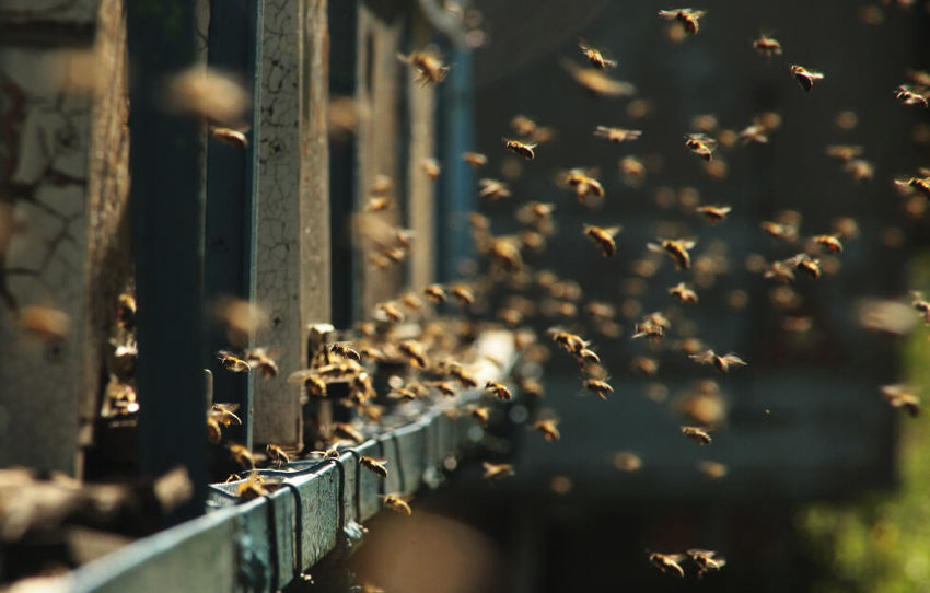 What Has Been Happening To All The Bees