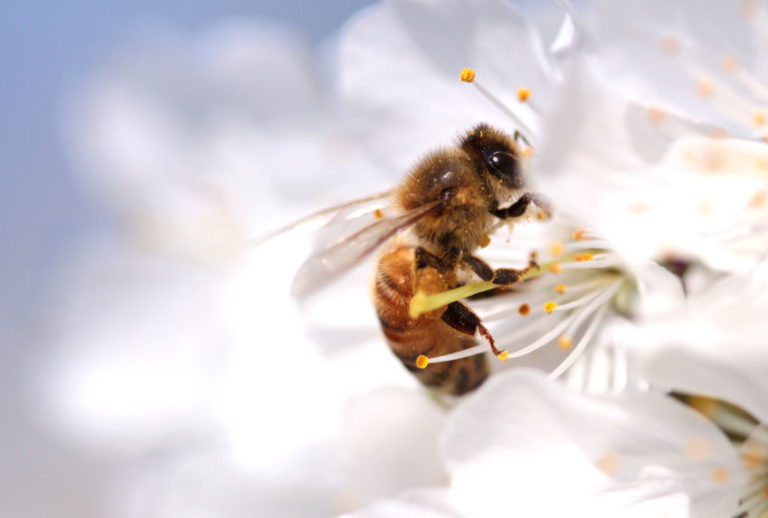 What Would Happen If Bees Went Extinct All Over the Planet?