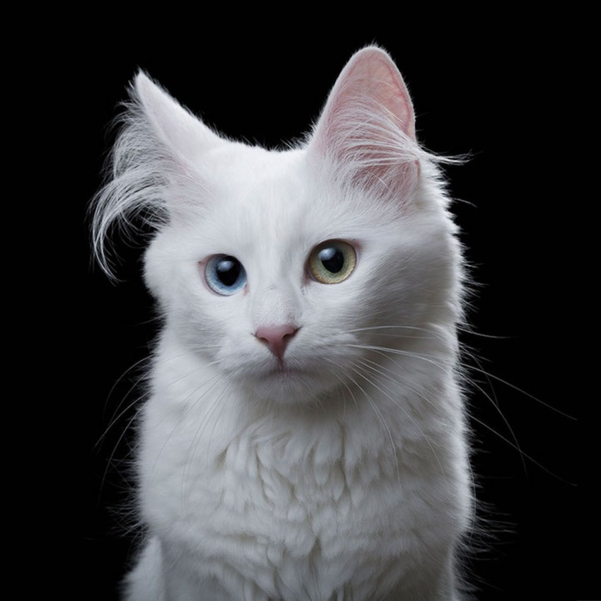 Soulful White Cat