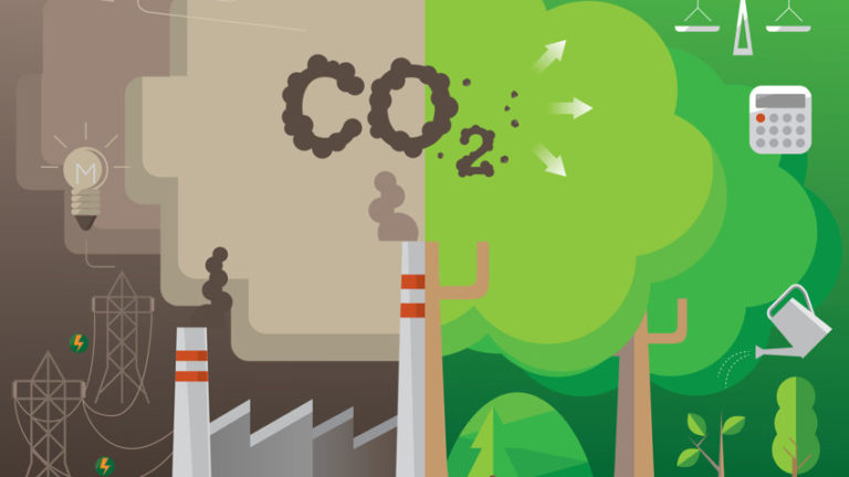 Read more about the article How to Reduce Your Carbon Footprint with 6 Everyday Actions