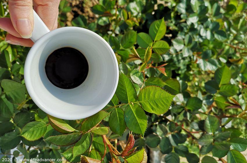 used coffee grounds fertilizer garden