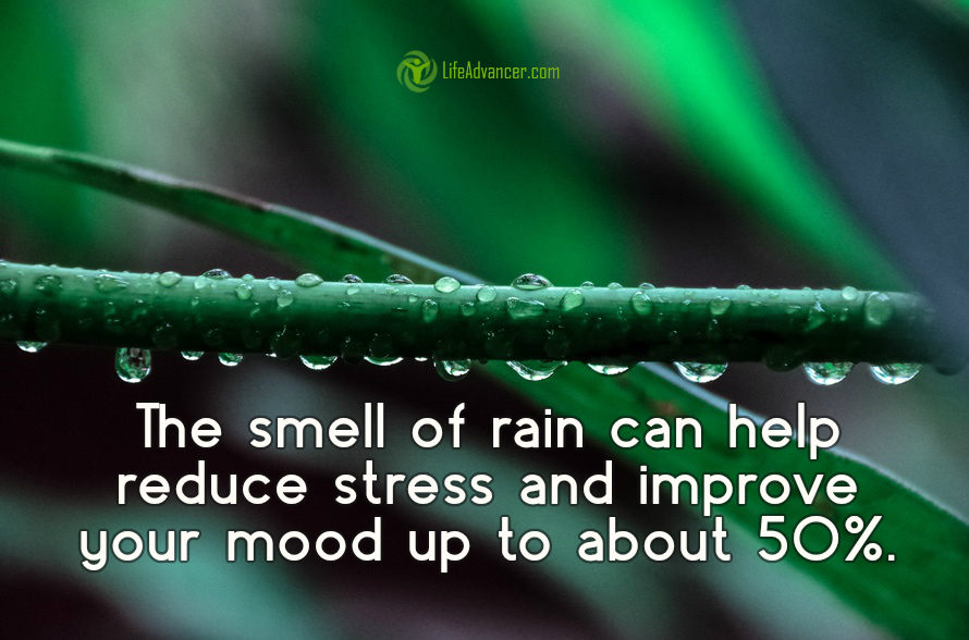 he smell of rain can help reduce stress and improve your mood by up to 60%