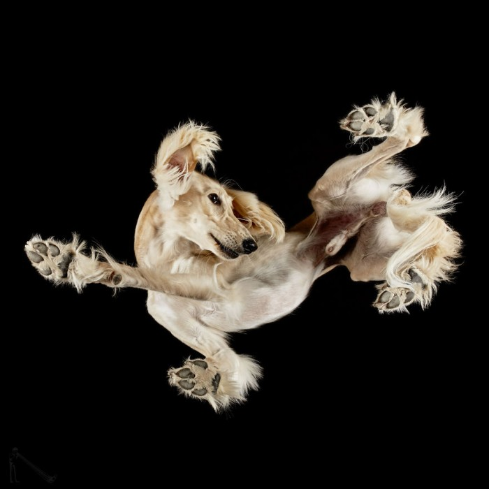 Breakdancing Pup