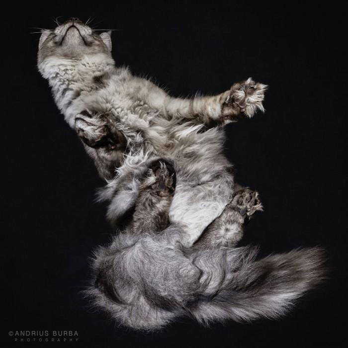 Feline Bender