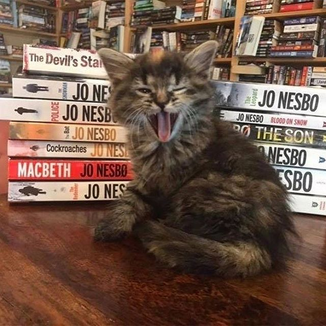 This Canadian Bookstore Is Also a Cat Shelter You Can Adopt a Kitten from!